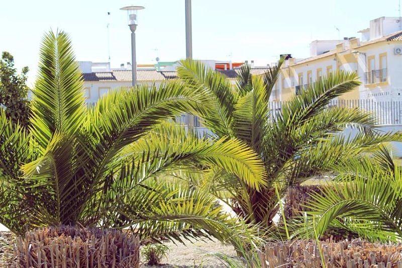 Residencia El Yate La Carlota José Lázaro Civill